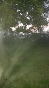 Июньский туман
