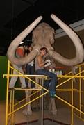 mamut en expo 360 ppm