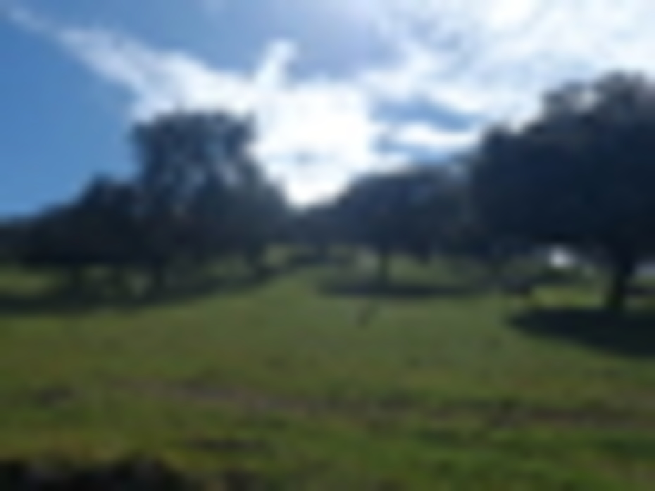 Parque Natural Valle de Alcudia y Sierra Madrona. Dehesas