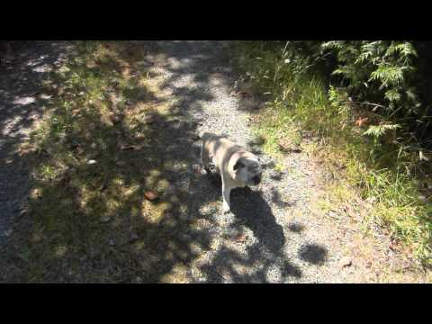 Zoe Walking at Our Place on Gabriola