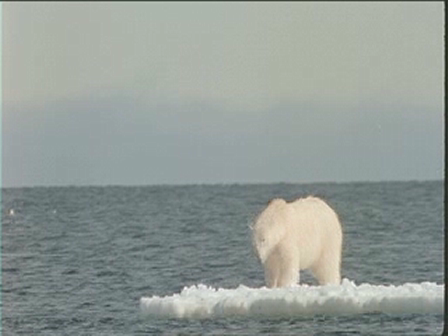 Save The Earth Polar Bear Video