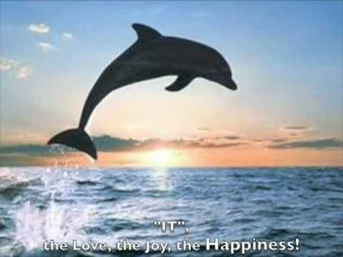 "DOLPHIN MEDITATION: ""Bubbles of JOY""!"