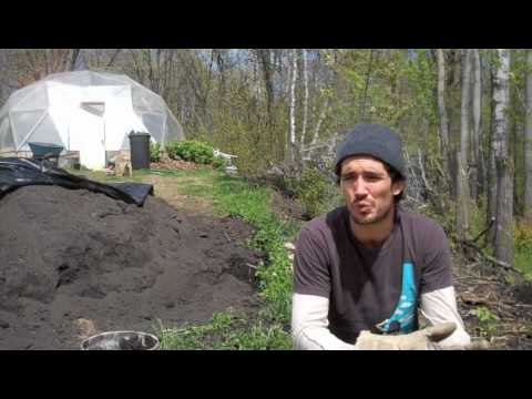 The Space of Love - Rawmodel's  Permaculture Food Forest