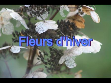 Fleur d'hiver