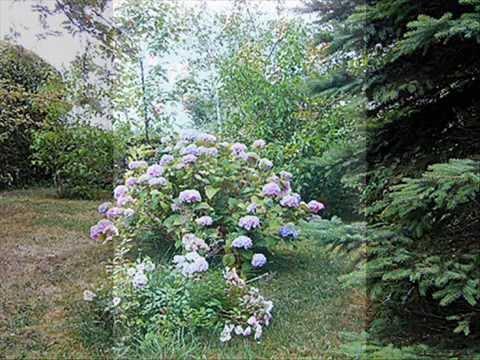 Primavera - antonia iliescu