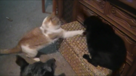 Buddy Refereeing My Cats Being Morons
