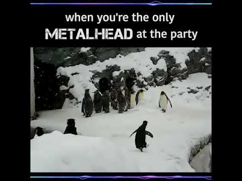 When your the only metalhead at the party