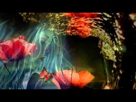 IRINA LUCIA MIHALCA - În fiecare stea există un suflet