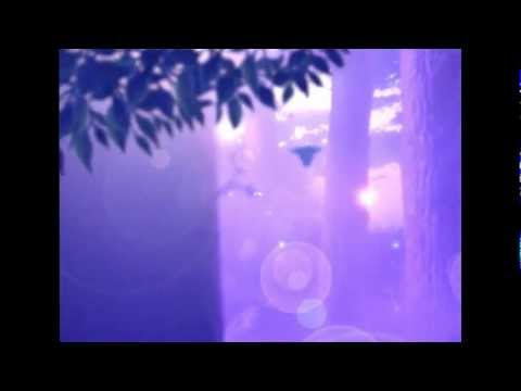 FOREST STORY-PART  ONE 6-12-12