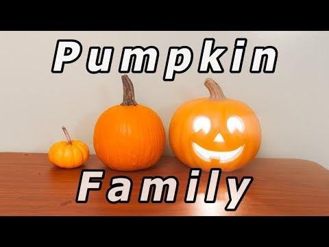 Stop motion - A modern pumpkin family