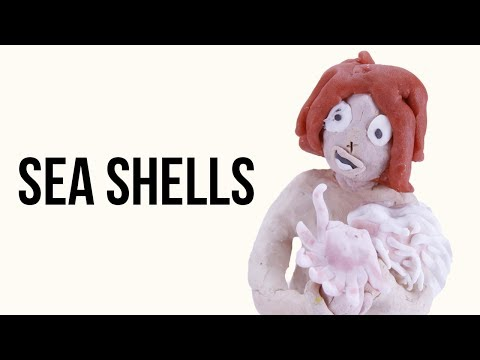 "Sea shell ""collection"" 