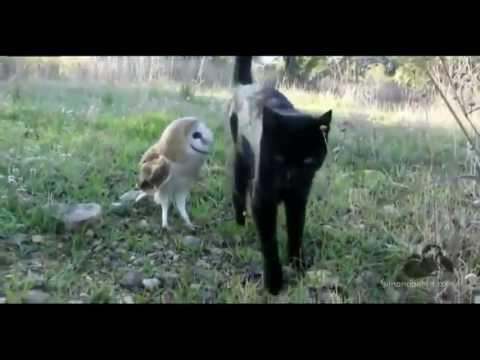 ¡La amistad entre un gato y una lechuza! :)