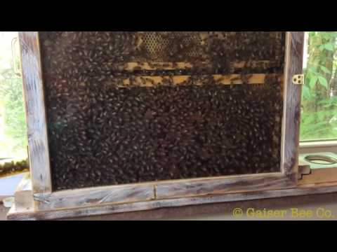 How A Honey Bee Hive Swarms