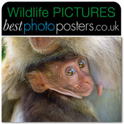 Macaque Mother & Child