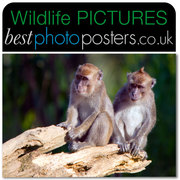 Crab-eating Macaques perched on a tree