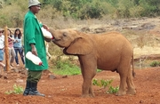 Wild Elephant Orphanage