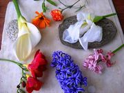 Εκδρομή γνωριμίας της χλωρίδας της Πάρου /  Discover the flora of Paros