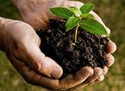 """Οι """"Φίλοι του Πάρκου Πάρου"""" Φυτεύουν / Making a Fig Tree nursery with the """"Friends of the Park"""""""