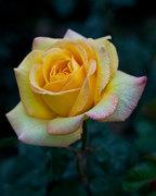 """นิทรรศการ """"ผลิ บาน"""" (Senses of Blooming)"""