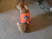 Watch out Aubie, you may have some competition