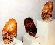 nephilim skulls