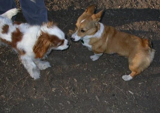 Dog Park 01-12-08 001