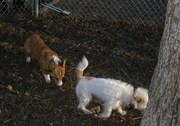 Dog Park 01-12-08 002