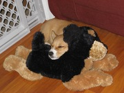 Mochi with her Stuffed Buddy, which she later turned on 3 months later and ripped his eyes out...