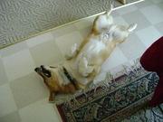 AHHHH nap time