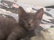 new baby Sooty