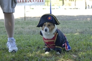 6th Annual Corgi Celebration