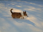 Butter likes sparkly snow!