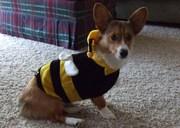 Sadie Bee