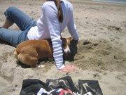Digging at Huntington Dog Beach