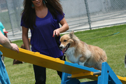 Griff's First Try at Agility