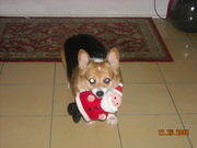 Dudley with his Christmas toy