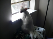 Isis at the window (02)