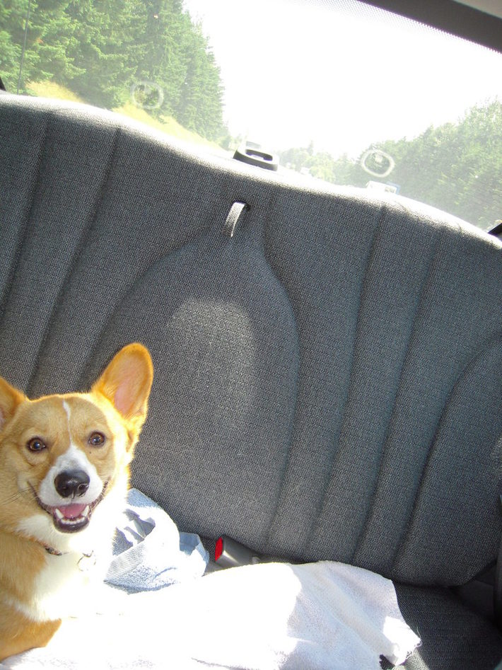Trip in the Car!