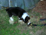 drinking from the water hose