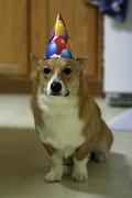 One thrilled dog