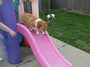 Tanner on slide