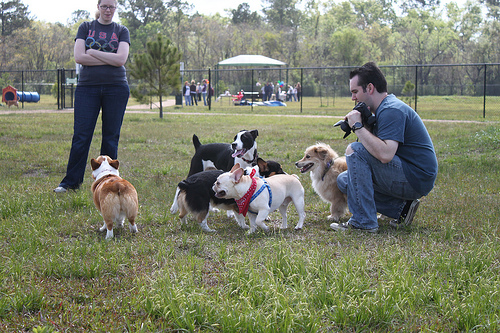 Houston Area Corgi Meetup 3-26-10