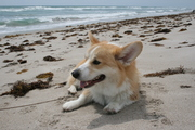 Chillin' at the beach