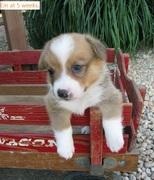 Ein's puppyhood.
