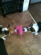 Pip and Cash.2