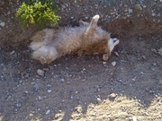 Then of course she had to roll in the dirt