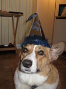Dewey's 4th Birthday--11-18-2011
