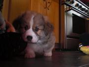 Ein, our puppy!