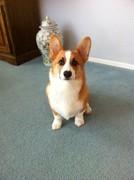 Cody 5 months