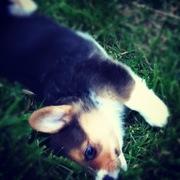 Draper_cutie